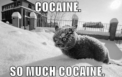 cocaine-cat1.jpg