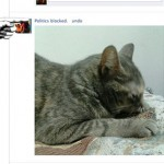 New Google Chrome Extension Replaces Your Friends' Political Rants on Facebook With Cute Pictures of Cats