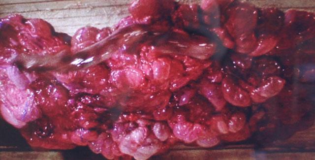 """""""The Blob"""" (1988)"""