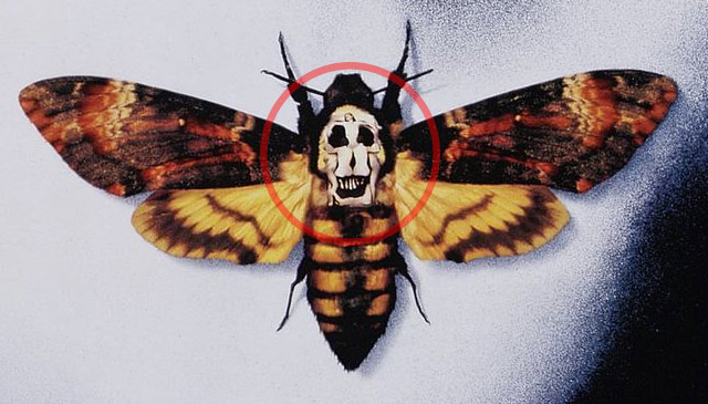 The Silence of the Lambs butterfly