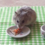 Now Tiny Hamsters Eat Tiny Pizza