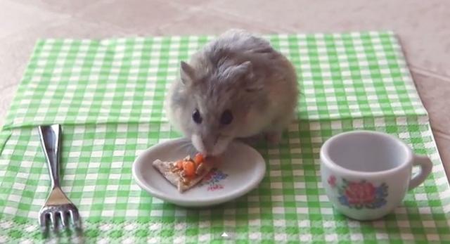 Now Tiny Hamsters Eat Tiny Pizza